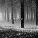 2-M50-S3-1960 Snow storm. © akg-images / Paul Almasy