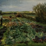 """""""The cabbage field"""", 1912. Oil on canvas, 70 x 100cm. akg-images"""