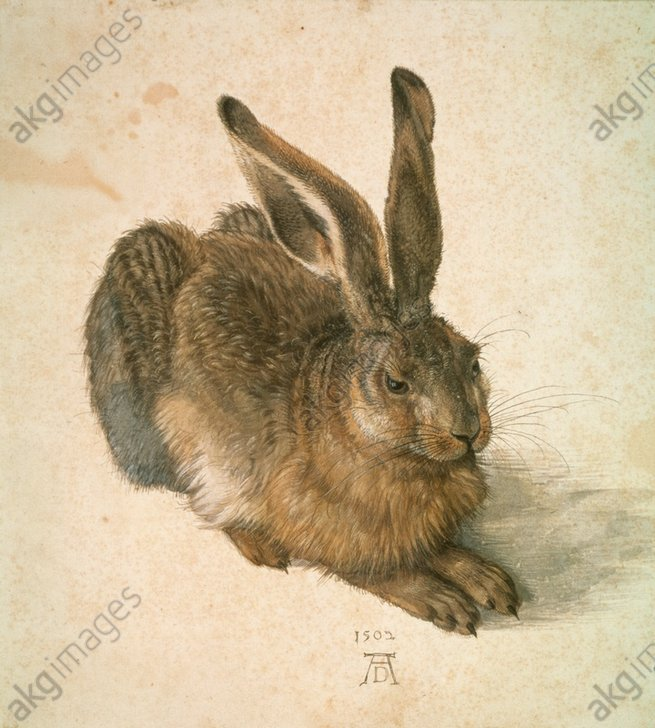 Young Hare / Duerer / 1502