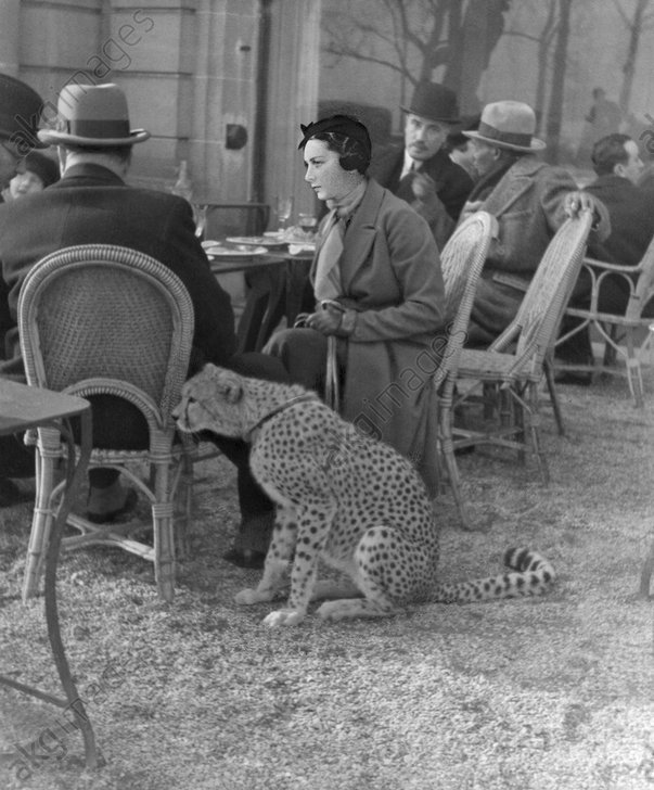 Lady with cheetah at a restaurant, 1933 © akg-images / ullstein bild